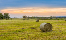 Big hay bale rolls in a lush green field Royalty Free Stock Image