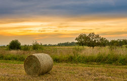 Big hay bale rolls in a lush green field Stock Photos