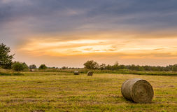 Big hay bale rolls in a lush green field Royalty Free Stock Photos