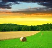 Big hay bale rolls Stock Photography