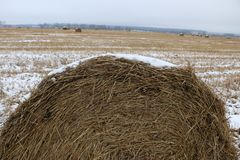 Hay rolls in the snow on a plowed field. Big hay rolls in the snow on a snow-covered empty plowed field Royalty Free Stock Image