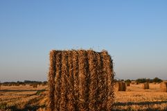 Field with big haystacks Stock Photography
