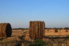 Field with big haystacks Royalty Free Stock Photos