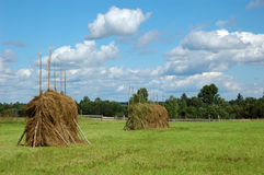 Big haystacks on the meadow Stock Photo