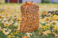 Big hazelnuts bag Royalty Free Stock Image