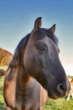 Big head. Photo of horse on pasturage Royalty Free Stock Photo