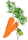 Big and health orange carrot - Vector Stock Image