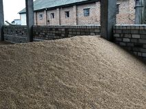 Big heaps of grain, good harvest stock photos
