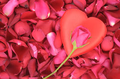 Big heart shape and rose on rose petals Royalty Free Stock Image
