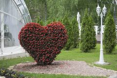 Big Heart (topiary figure) of fresh flowers in the park Stock Photography