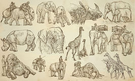 BIG and HEAVY ANIMALS - An hand drawn vector pack, line art Stock Image
