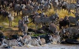 Big herd of wildebeest is about Mara River. Great Migration. Kenya. Tanzania. Masai Mara National Park. An excellent illustration Stock Photos