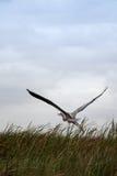 Big heron Stock Images
