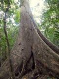 Big and high tree Stock Photos