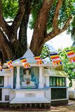 Big holy Bodhi tree surrounded by buddhas on a square is Sri Lan royalty free stock images