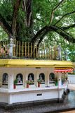 Big holy Bodhi tree surrounded by buddhas on a square is Sri Lan royalty free stock photo