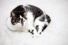 Big home cat is lying on a bed Stock Photo
