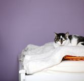 Big home cat is lying on a bed Royalty Free Stock Images