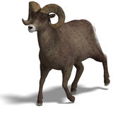 Big horn sheep aries Royalty Free Stock Images