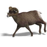 Big horn sheep aries Stock Photos