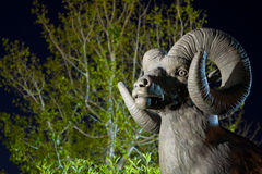 Big Horn Sheep Statue Royalty Free Stock Photo