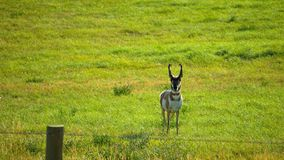 Big Hornbergen in Buffels Royalty-vrije Stock Afbeelding