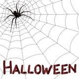 Big horrifying spider on the web Stock Photography