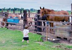 Big horse looking at small boy Stock Photos