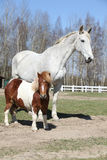 Big horse with pony friend Royalty Free Stock Photo