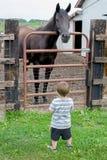 Big horse small boy Stock Photos