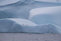 Big Iceberg being the Playground for the Penguins in Antarctica Royalty Free Stock Photos