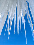 Big icicles on blue sky background stock image