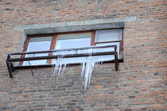Big icicles at a window, against a brick wall. Stock Images
