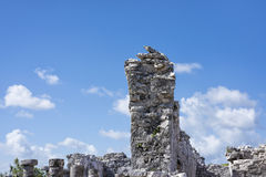 Big iguana/lizard wildlife animal guarding the ancient ruins of Stock Photography