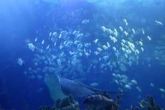 Big indoor aquarium with selection of different marine animals Stock Photo