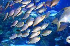 Big indoor aquarium with selection of different marine animals Stock Image