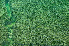 Big Island aerial shot - eucalyptus rain forest Stock Photos