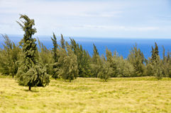 Big Island East Shore Royalty Free Stock Image