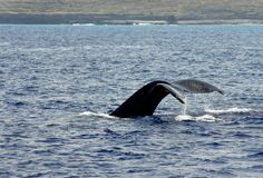 Big Island Whale Tail Stock Images