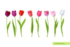 Big Isolated tulips flowers set Royalty Free Stock Photography