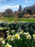 Big John and Daffodils Stock Images