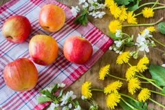Big juicy red apples near  the flowers Stock Images