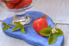 Big and juicy strawberry and blossoming flower on blue background close up. Big and juicy strawberry and blossoming flower on blue, wooden board on white Stock Image