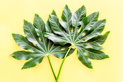 Big jungle leaves on yellow background top view Royalty Free Stock Image