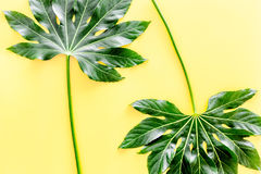 Big jungle leaves on yellow background top view Stock Photo
