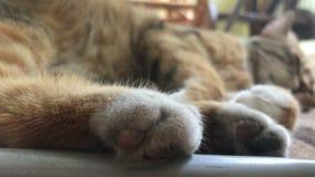 Big Kitty with soft paws sleeps stock footage