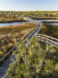 Big Lagoon Tree and Boardwalks. Boardwalk trails cross a tidal outlet to Grand Lagoon in Big Lagoon State Park near Pensacola, Florida royalty free stock photo