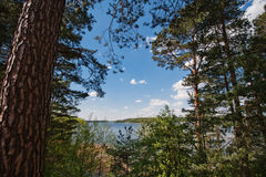Big lake behind the forest. A big lake behind the forest. Behind the pine forest is a lake. A blue cloudy sky Royalty Free Stock Images