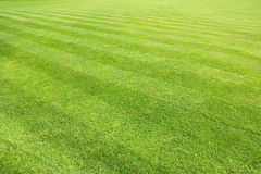 Big lawn. Cut with stripes Royalty Free Stock Photography