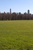 Big lawn in New York Stock Images